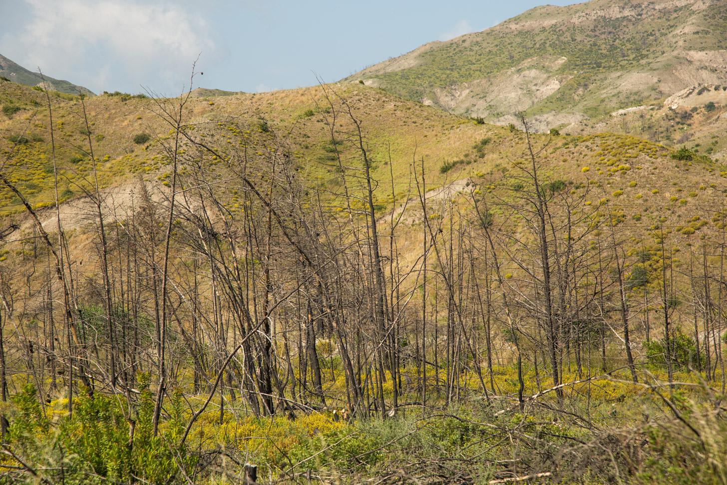 Bosbranden op Rhodos